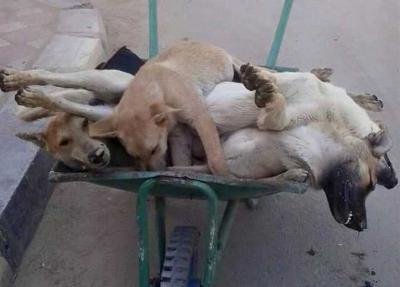 كلاب الشوارع تقلق مضاجع السكان